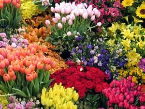 Nhu1eefng cu00e1ch chu1ecdn hoa cho ngu00e0y Tu1ebft cu1ee7a ngu01b0u1eddi Viu1ec7t