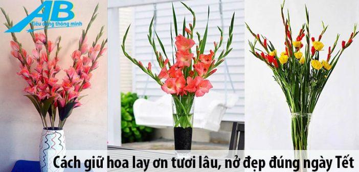 Cách giữ hoa lay ơn tươi lâu, nở đẹp đúng ngày Tết