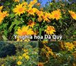 Ý nghĩa hoa Dã Quỳ