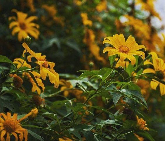 Loài hoa rực rỡ sắc hương