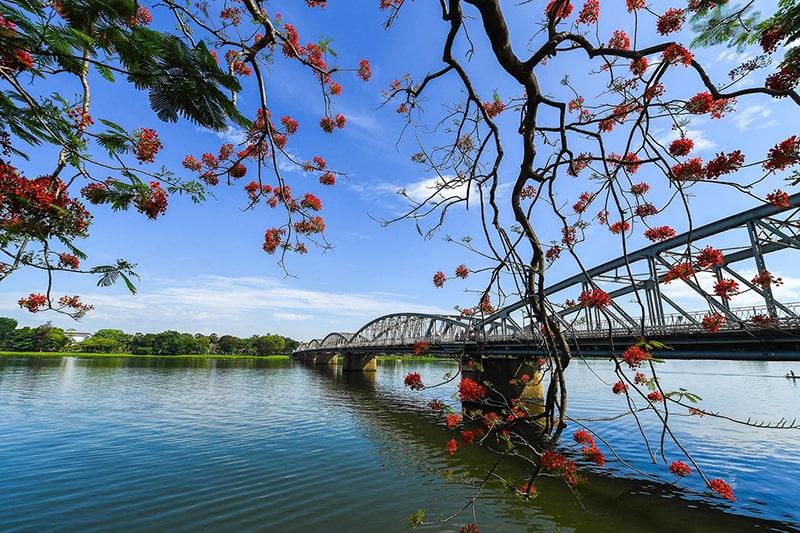 Hoa phượng đỏ rực trên sông Hương
