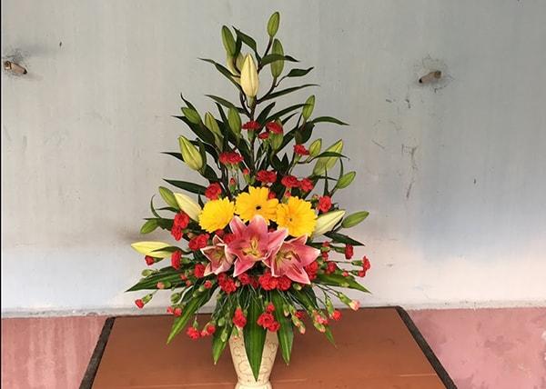 Kỹ thuật chăm sóc, bảo quản hoa cẩm chướng cắt cành