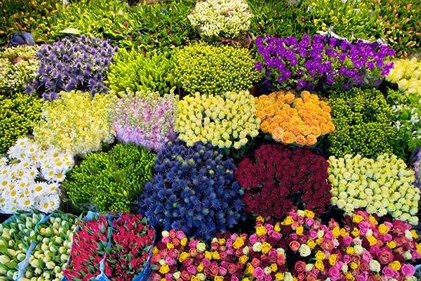 Sử dụng các dung dịch bảo quản để bảo quản hoa cắt cành