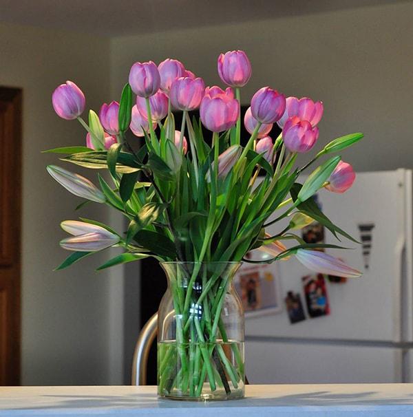Kỹ thuật chăm sóc, bảo quản hoa tulip cắt cành