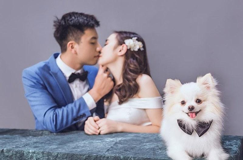 Kiểu chụp ảnh cưới chụp hình với thú cưng